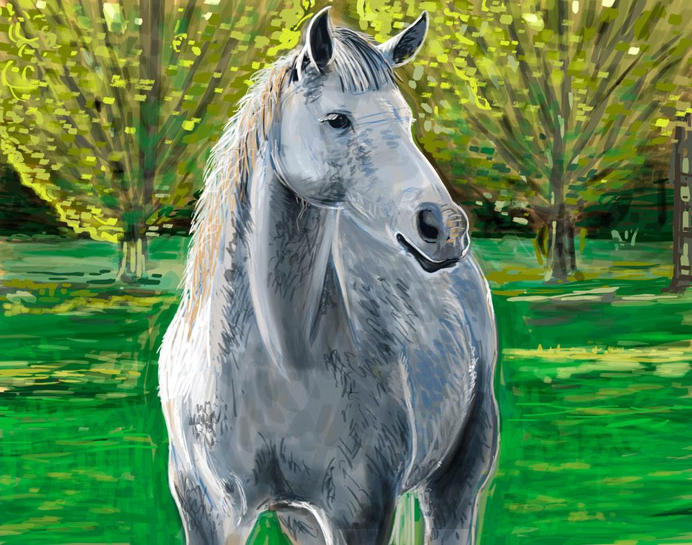 Horse-in-field-Illustration-optimised